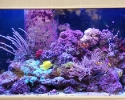 Soft reef aquarium in Largo, FL