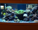 Reef aquarium display
