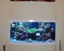 Custom aquarium in Clearwater, FL
