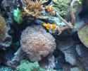 Corals & Saltwater Fish