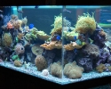 Saltwater Reef Aquarium Display