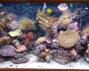 Saltwater reef aquarium corals & fish