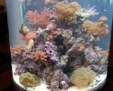 Cylinder saltwater aquarium