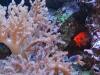 Saltwater fish & corals