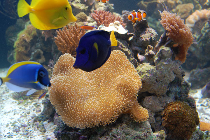 Aquarium Choices: The Sea's the Limit (Part 2)