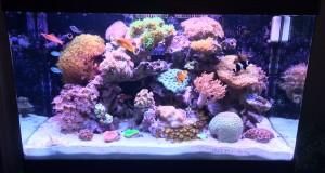 Picture of a 60 gallon reef aquarium we maintain