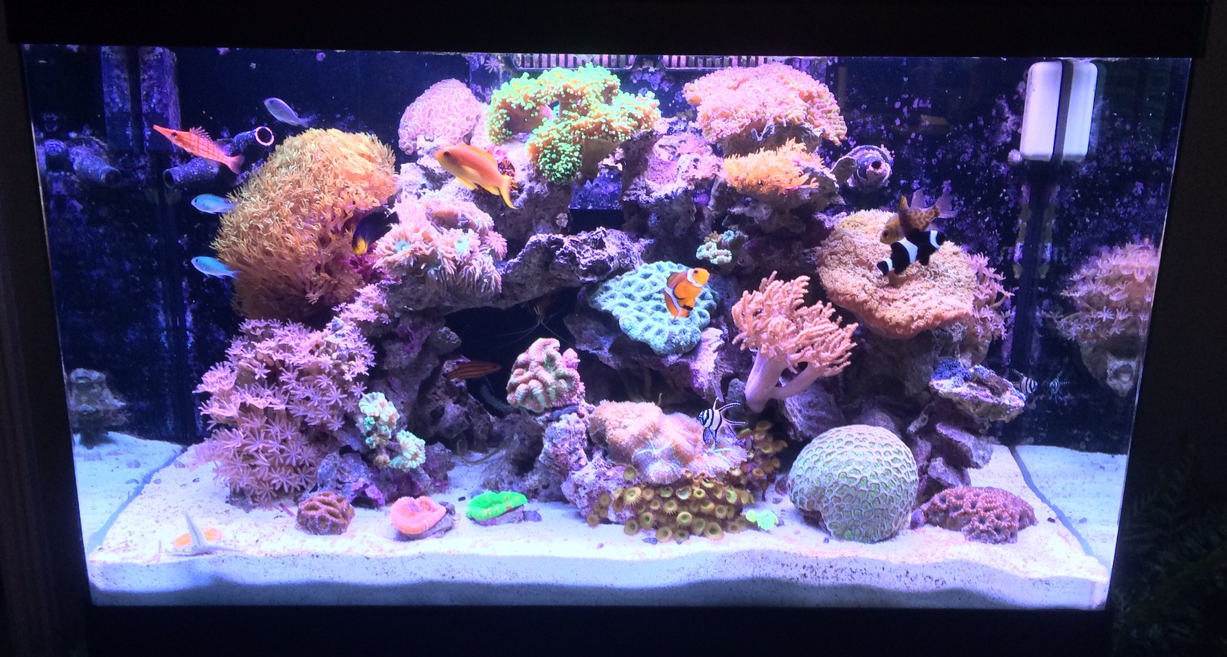 A quick shot of a nice little 60 gal reef we maintain