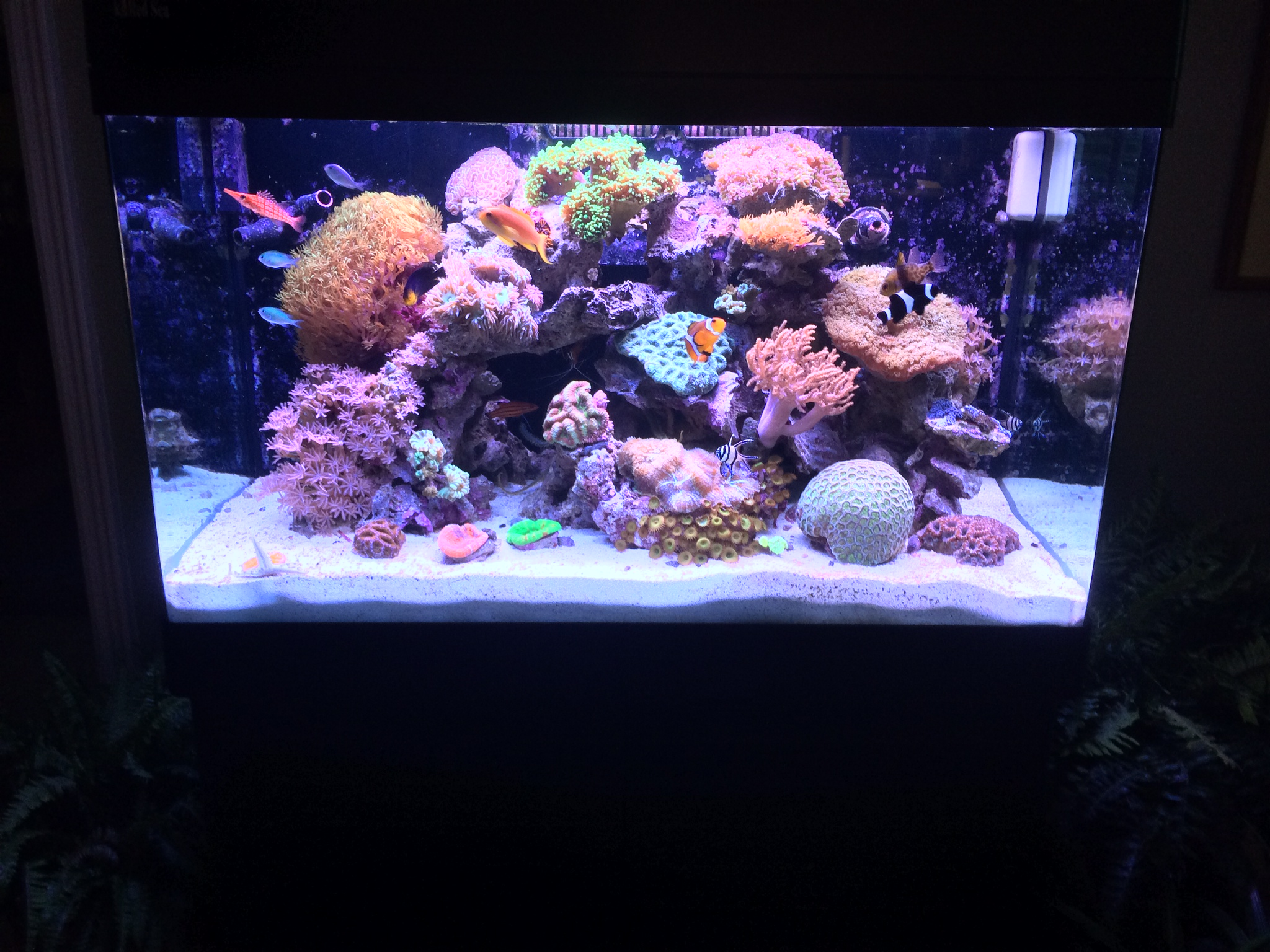 a quick shot of a nice little 60 gal reef we maintain. Black Bedroom Furniture Sets. Home Design Ideas